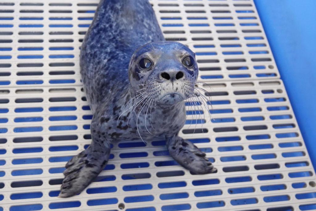 PV19102 Bush Baby - Marine Mammal Rescue Centre