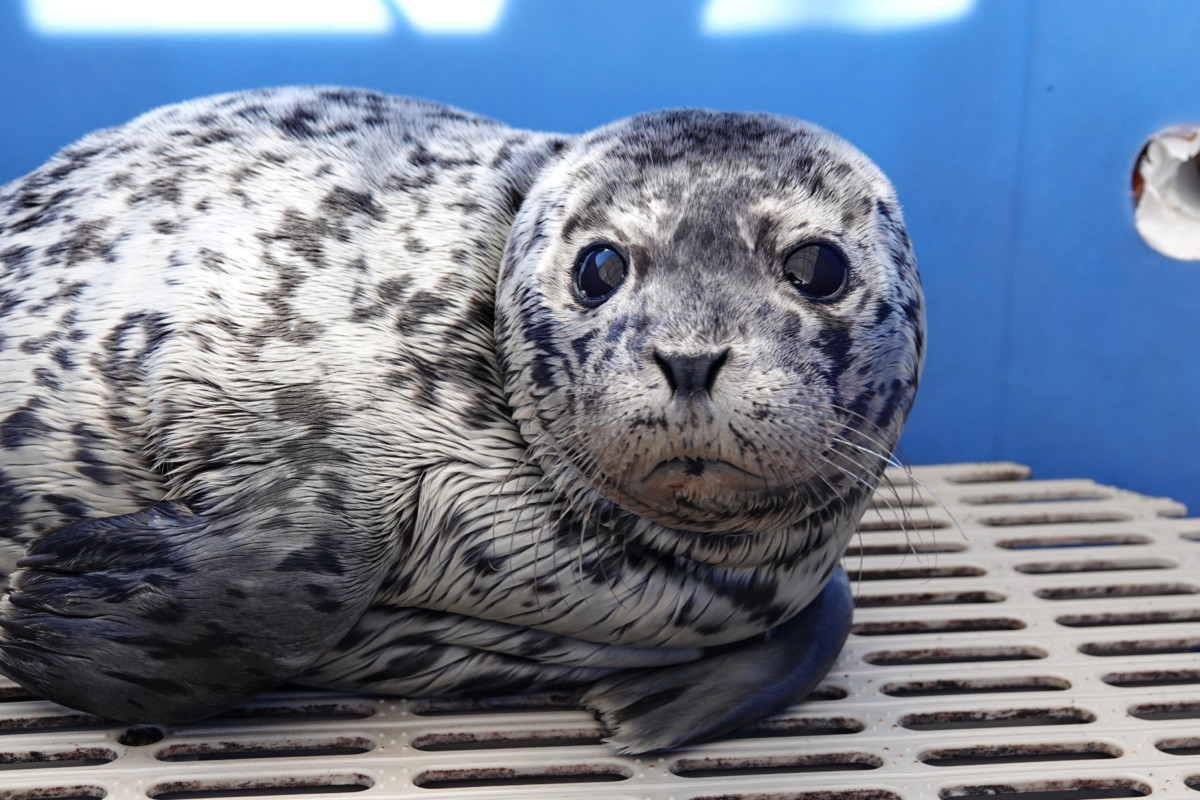 Adopt Porpoise